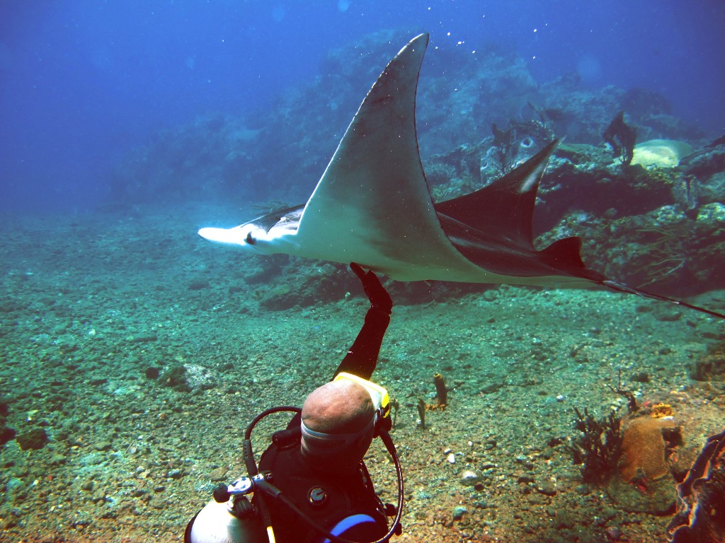 Diver touch Manta